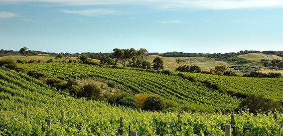 Mornington-Peninsula-wine-tours2